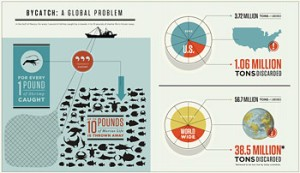 bycatch_infographic_thumb